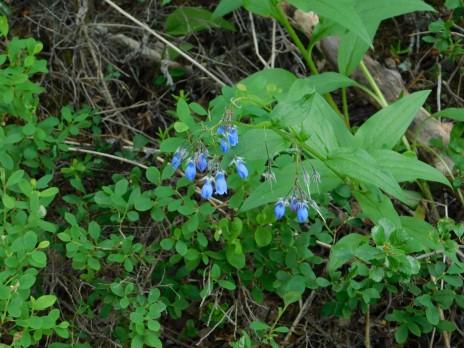 Wild flowers 2 Denali
